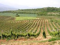 Vinice Skovin v Makedonii, 20 kB